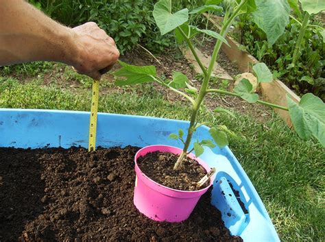 What Soil To Use For Vegetable Garden Excursus To Container Vegetable Gardening Garden Design