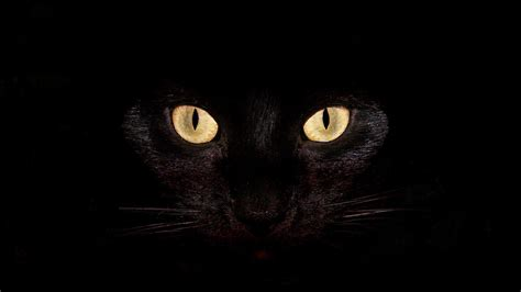 wallpaper yellow cat black cat with yellow eyes on black background wallpapers