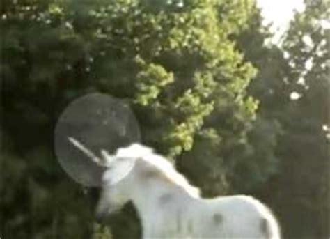 imagenes de unicornios bebes reales un videoaficionado graba un unicornio en canad 225 el blog