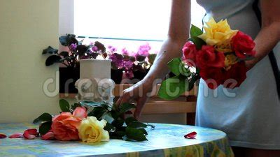 Putting Roses In A Vase by Putting Flowers In Vase Stock 63307027