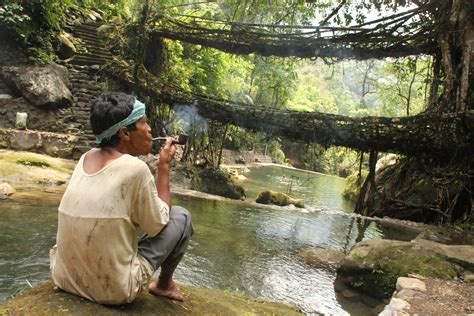 living bridges file living root bridges nongriat village meghalaya jpg