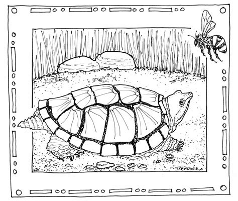 michigan wildlife a coloring field guide books coloring book circle d wildlife refuge