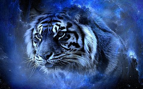 Blue Tiger tiger in blue hd wallpaper and achtergrond