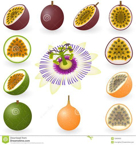 frutti free z price fruit stock photos image 12669003