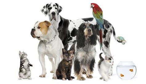 fotos animales juntos convivencia entre mascotas de diferente especie