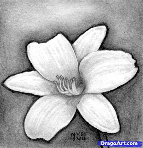 Easy Real Flowers To Draw by How To Draw A Realistic Flower Step By Step Realistic