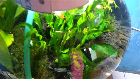 model desain aquascape aquarium bulat dengan desain aquascape hd youtube