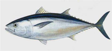 c 244 ng ty tnhh mười tuyền vựa hải sản phan thiết vựa hải sản mười tuyền kinh doanh hai san phan