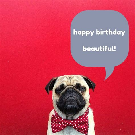 Birthday Pug Meme - 17 best images about because i m happy on pinterest