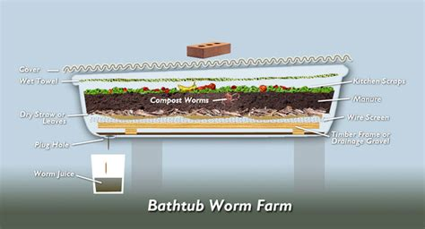 how to build a worm bed worm farm the epilogist