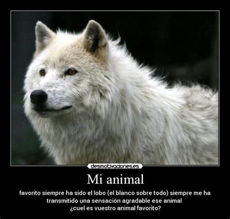imagenes animal espiritual usuario lobo desmotivaciones