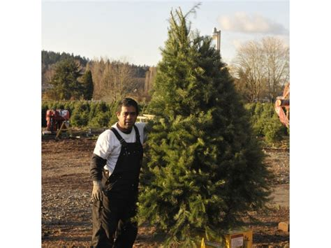 holiday guide where to cut your own christmas tree patch