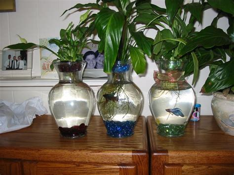 betta vase betta fish and plant vase images frompo