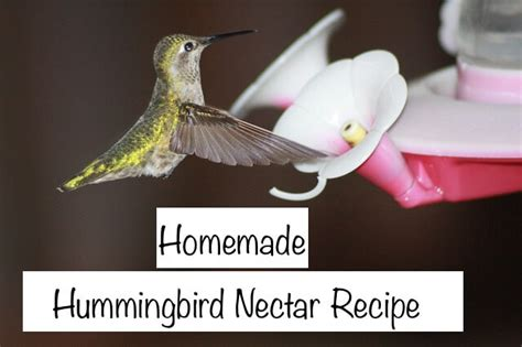 the hummingbirds are back let s make some food nikki