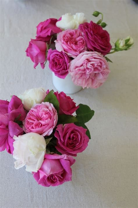 vintage roses beautiful varieties 329 best old fashioned roses images on beautiful roses garden roses and beautiful