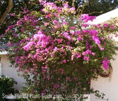 Flowering Patio Plants by Large Shrubs