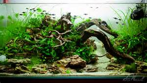 interesting driftwood aquarium aquascape