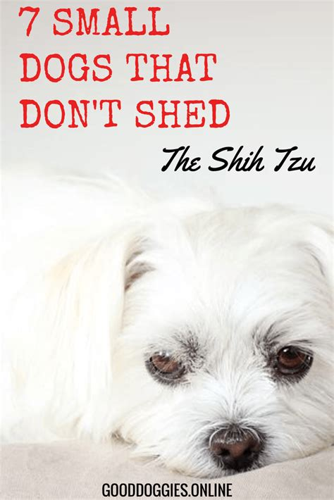 adorable small dogs  dont shed good dog info
