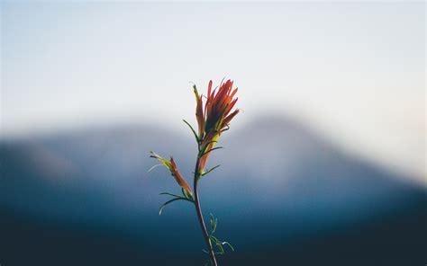 best wallpapers flower close up stem bokeh wallpaper 2560x1600