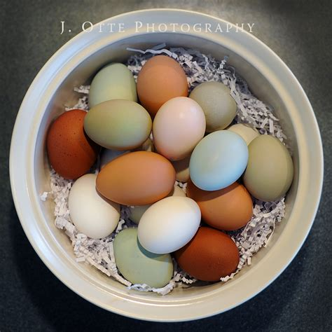 chickens that lay colored eggs coop day usa it be s that way sometimes