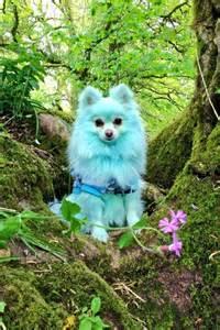 Climbing Geranium Plants - keep your dogs safe poisonous plants talent hounds