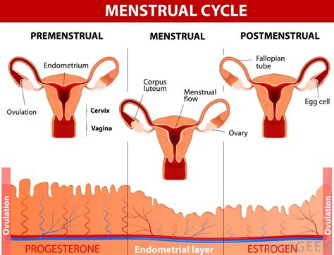 mood swings after period what is the connection between ovulation and mood swings