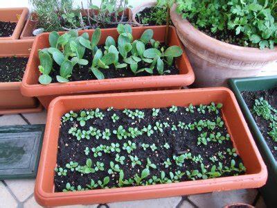 piccola area di terreno con erba e fiori coltivare le erbe aromatiche sul balcone