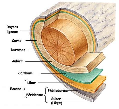 meuble de rangement jouet 3853 le mat 233 riau bois science du bois les