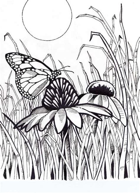 complicated butterfly coloring pages pinterest the world s catalog of ideas