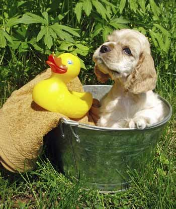 bathing a puppy bathing a puppy for the time