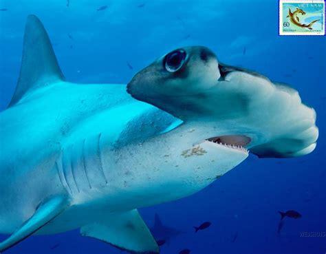 squalo tappeto squalo tappeto tassellato nonsolodiaz