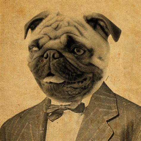 pug in a suit luciusart pug in a suit 8x10 print store powered by storenvy