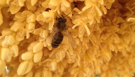 minicuentos de abejas y 8448838475 las abejas empiezan a recoger el polen en primavera