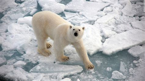the polar bear explorers 0571332544 two female explorers you should know about cnn com