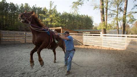 horses testo taming mustangs part 1 a ride