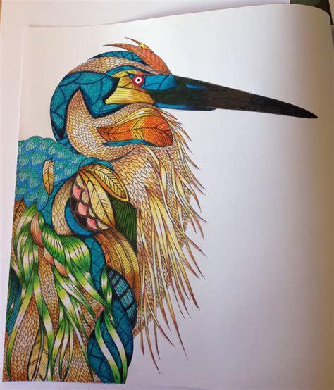 millie marotta s animal kingdom a colouring book adventure 163 2 prime 163 4 99 non prime