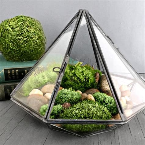 Plants In Vases Geometric Glass Diamond Terrarium With Plants Apollobox