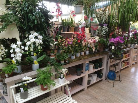 house plant display  redfields garden centre part