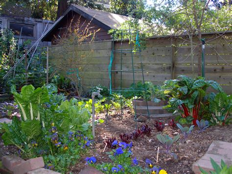 How To Start A Backyard Vegetable Garden by Various Plants And Flowers Backyard Garden House Design