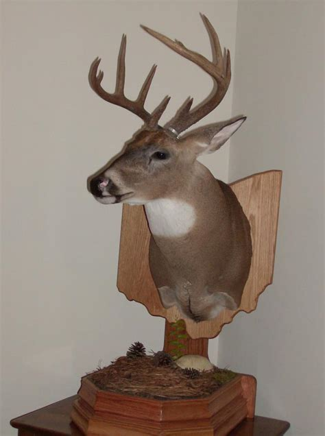 Whitetail Pedestal Mount Ideas whitetail pedestal mount ideas page 2 huntingnet