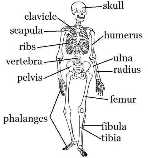 game of bones bone skeleton worksheet and craft human body bones game worksheets and skeletons