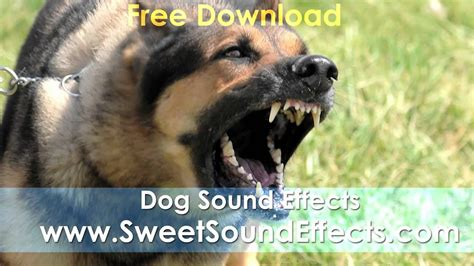 dog barking sound effects youtube