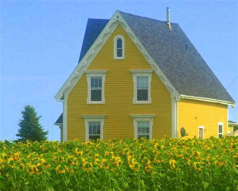 yellow house in the sunflower fields pinteres
