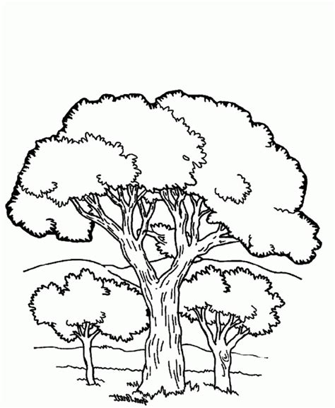 Download A View Of Trees And Beautiful Mountain Coloring Beautiful Trees Coloring Page