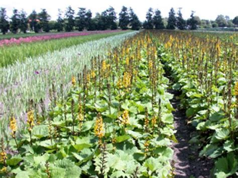 wur bloemen herbiciden leaflet zomerbloemen wur