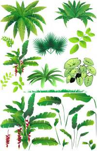 Rainforest Tree Template by Rainforest Plants Vector Vector Graphics