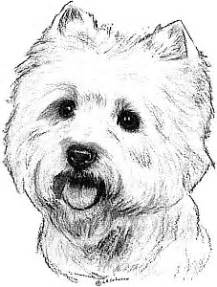 How To Draw A Westie Highland Terrier Sketch Coloring Page sketch template