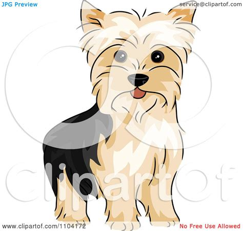 how to clip a yorkie clipart happy alert terrier yorkie royalty free vector illustration by
