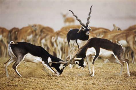 Animal Indian 03 wildlife in india 171 travel2cities
