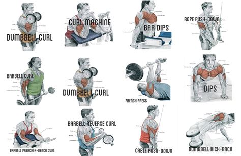 best exercises for big biceps best biceps workout for best workout program for strong and arms